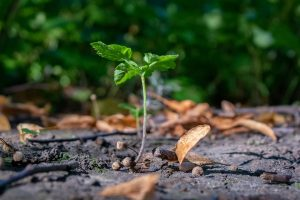 small plant growing through hard ground to show the difficulty in growing a small business in 2020. the background is a blurred hedgerowand there are fallen leaves and twigs lying on the ground .